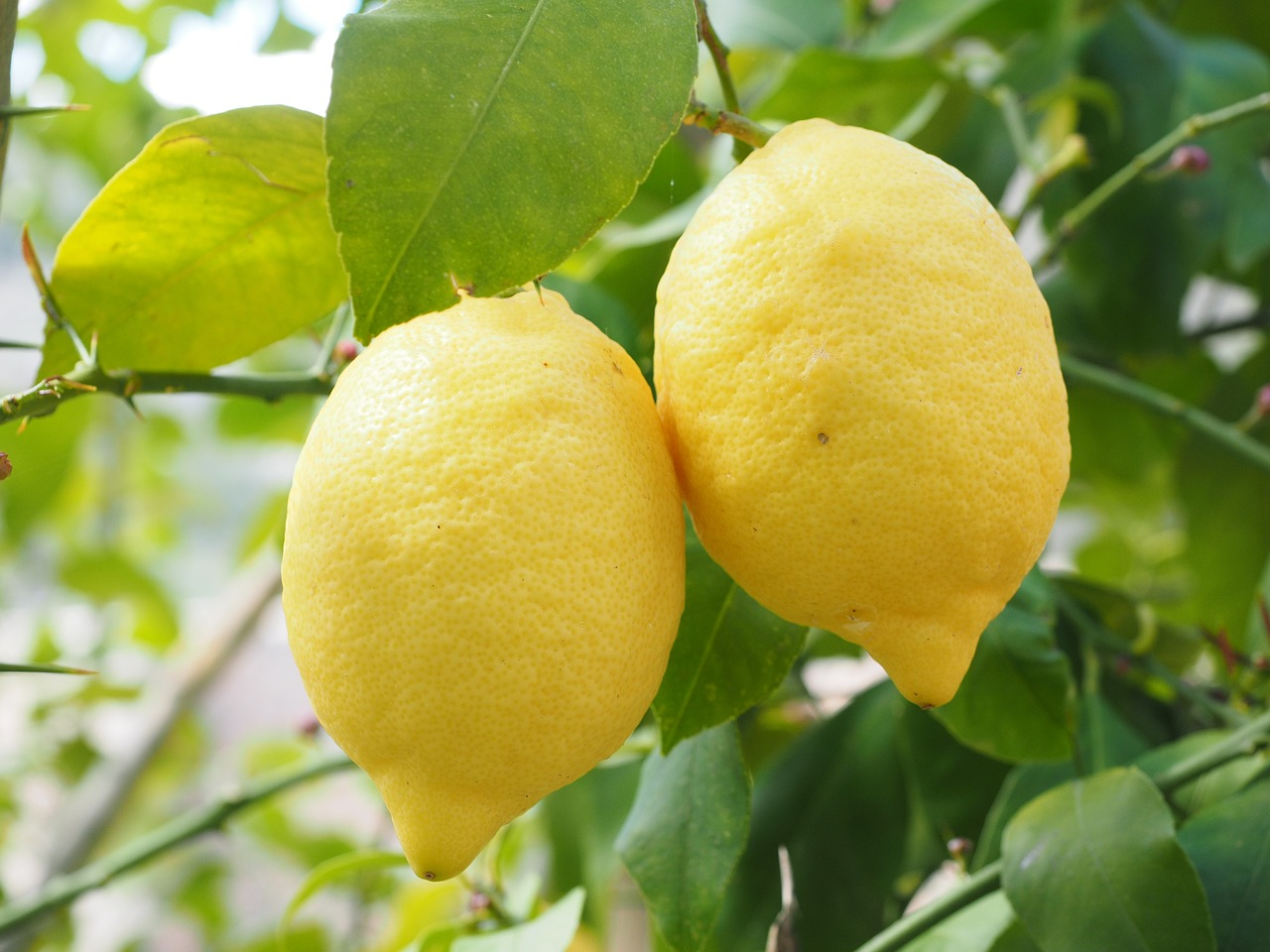 limoni - benefici e proprietà